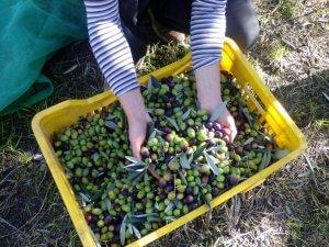 Olio di oliva in vendita online