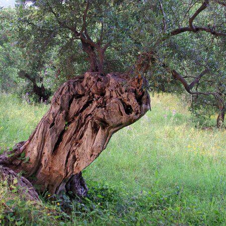 Adozione alberi