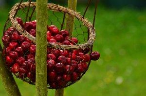 Compra le migliori ciliegie online